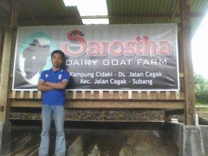 Peternakan KAmbing Perah Indonesia