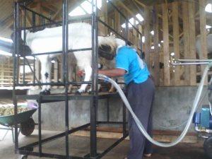 mesin perah kambing skusi PE Peternakan KAmbing Perah Indonesia