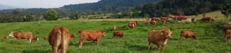 Padang gembala merupakan sebuah areal aktif ekosistem yang digunakan untuk menggembalakan ternak. Ada beberapa yang mendefinisikan sebagai padang rumput. Hal tersebut tidak ada yang salah karena tujuan utamanya adalah pemenuhan kebutuhan pakan terutama kebutuhan hijauan pakan/serat.