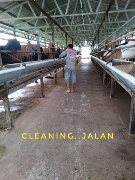 Kebersihan Tempat pakan dan jalan