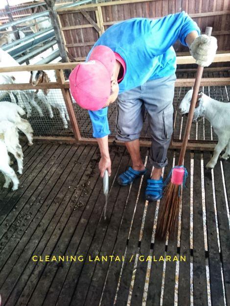 Kebersihan lantai kandang