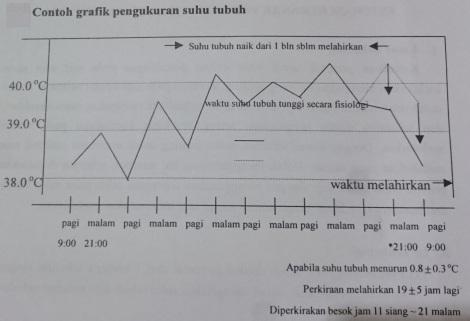 Grafik pengukuran suhu sapi estimasi lahir