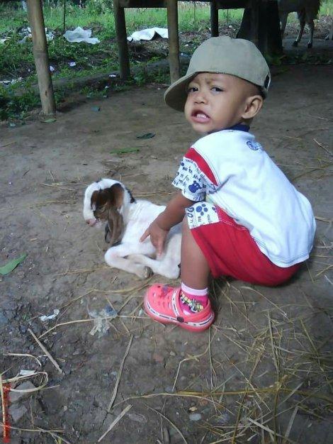 Memahami status fisiologi kambing domba