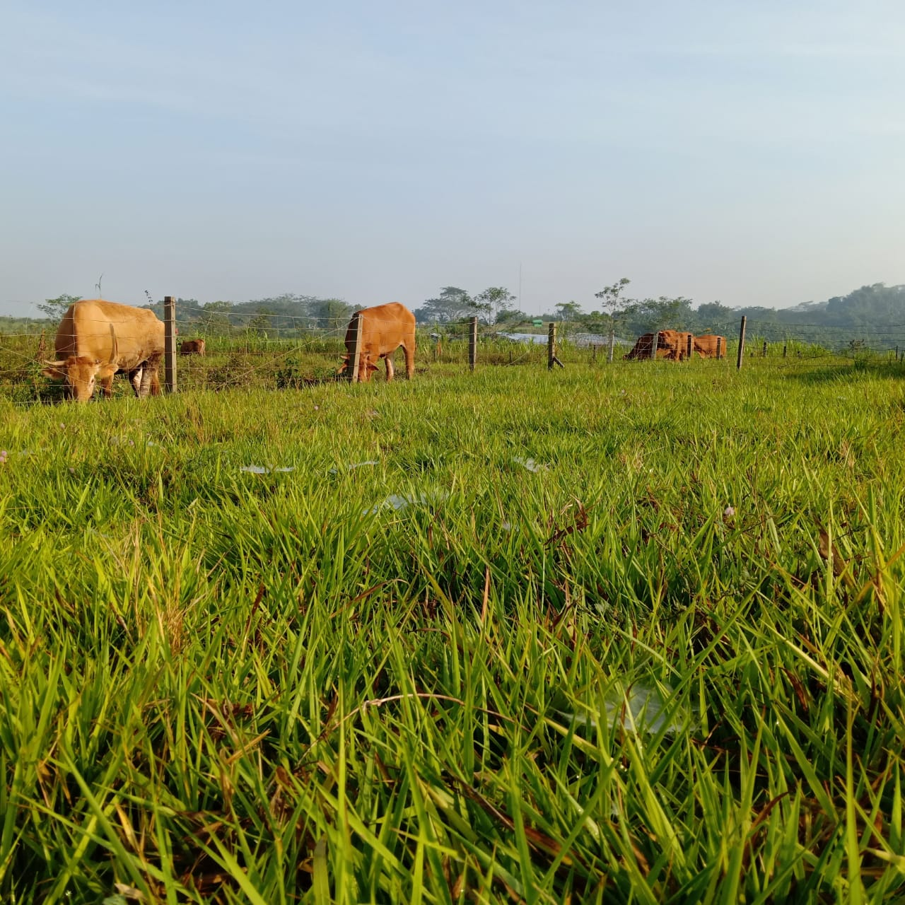 Padang Gembala Vegetasi Kurang Beragam