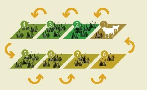 Jadwal Grassing, Rotasi
