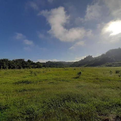 Padang Rumput Ternak